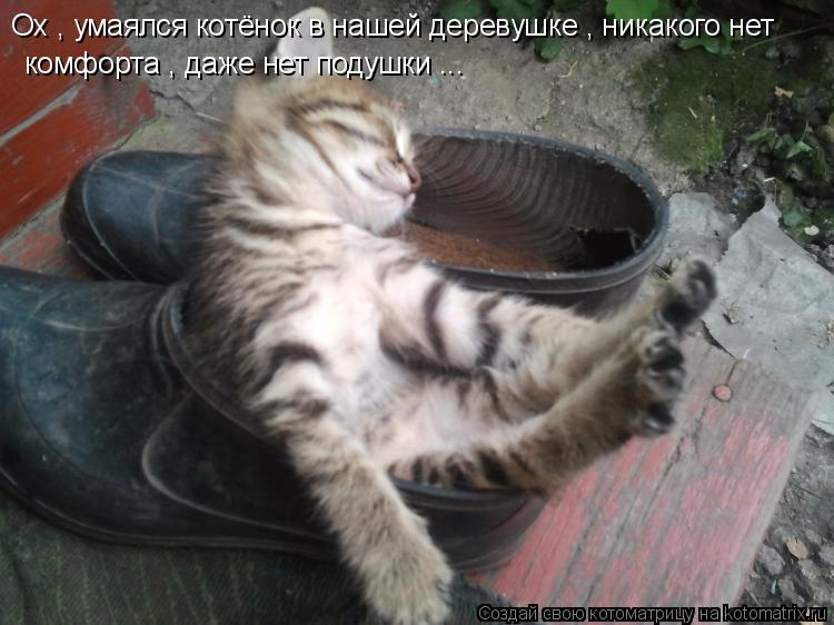 Котоматрица: Ох , умаялся котёнок в нашей деревушке , никакого нет  комфорта , даже нет подушки ...