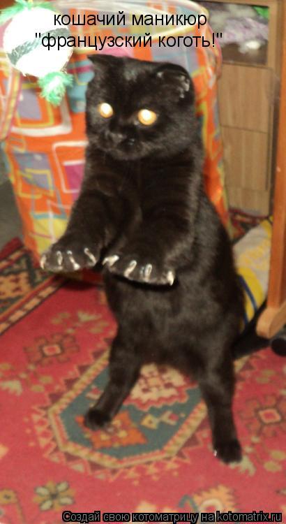 "Котоматрица: кошачий маникюр ""французский коготь!"""