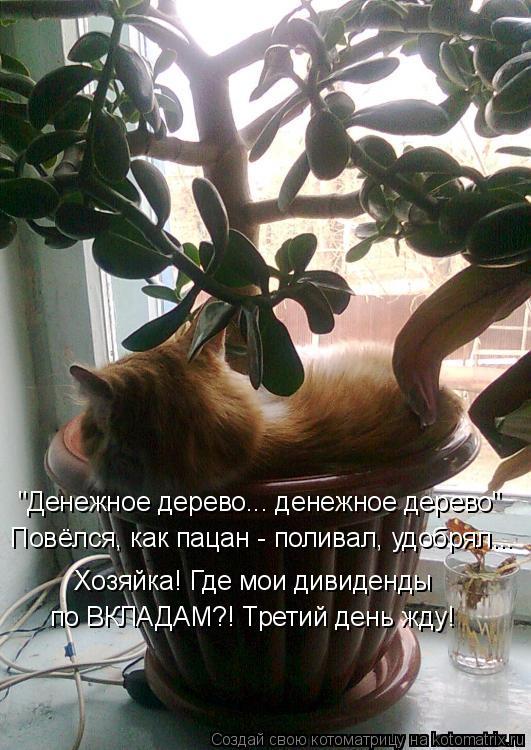 """Котоматрица: """"Денежное дерево... денежное дерево"""" Повёлся, как пацан - поливал, удобрял... Хозяйка! Где мои дивиденды  по ВКЛАДАМ?! Третий день жду!"""
