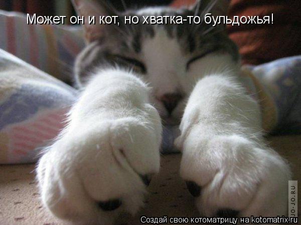 Котоматрица: Может он и кот, но хватка-то бульдожья!