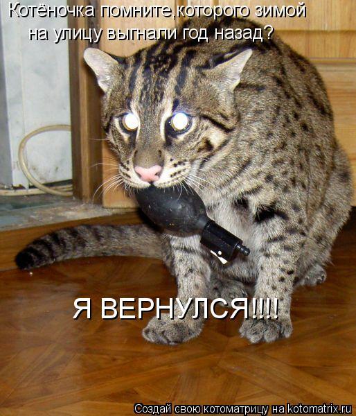 Котоматрица: Котёночка помните,которого зимой на улицу выгнали год назад? Я ВЕРНУЛСЯ!!!!