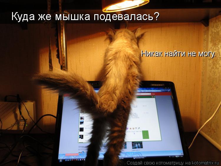 Котоматрица: Куда же мышка подевалась? Никак найти не могу.