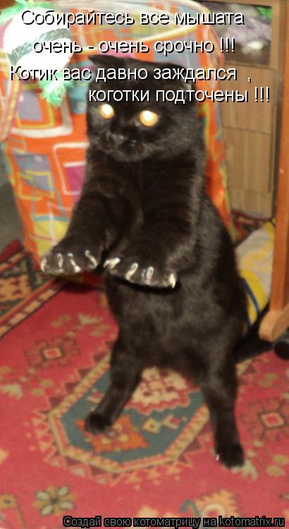 Котоматрица: Собирайтесь все мышата очень - очень срочно !!! Котик вас давно заждался  , коготки подточены !!!