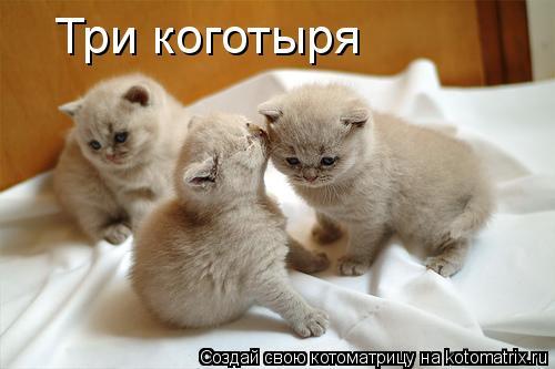 Котоматрица: Три коготыря