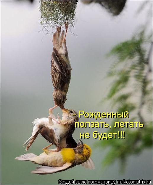 Котоматрица: - Рожденный ползать, летать не будет!!!