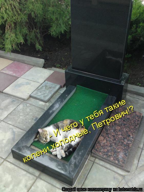 Котоматрица: - И чего у тебя такие  колени холодные, Петрович!?