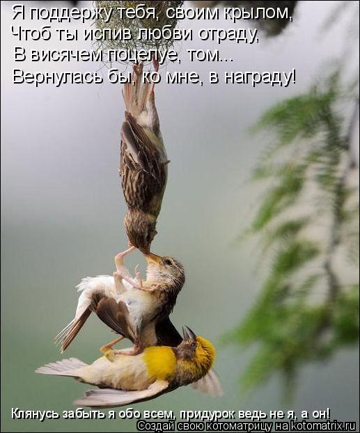 Котоматрица: Я поддержу тебя, своим крылом, Чтоб ты испив любви отраду, В висячем поцелуе, том... Вернулась бы, ко мне, в награду! Клянусь забыть я обо всем,