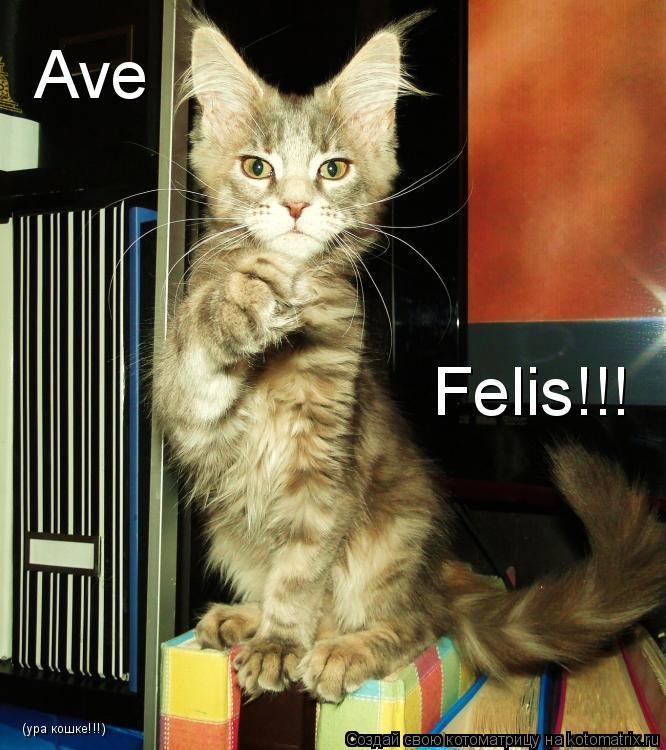 Котоматрица: Ave Felis!!! (ура кошке!!!)