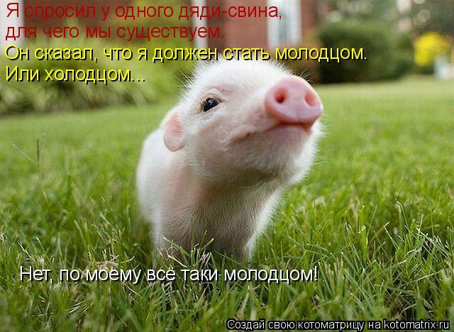 Котоматрица: Я спросил у одного дяди-свина,  для чего мы существуем. Он сказал, что я должен стать молодцом. Или холодцом... Нет, по моему всё таки молодцом!