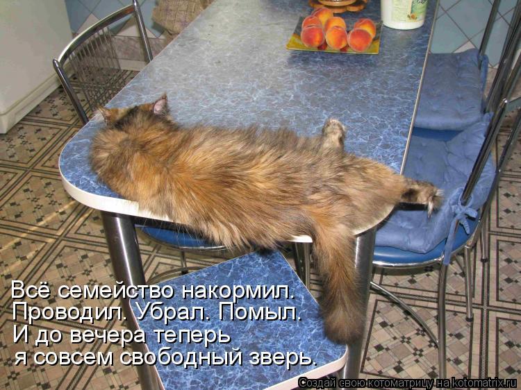 Котоматрица: Всё семейство накормил. Проводил. Убрал. Помыл. И до вечера теперь я совсем свободный зверь.