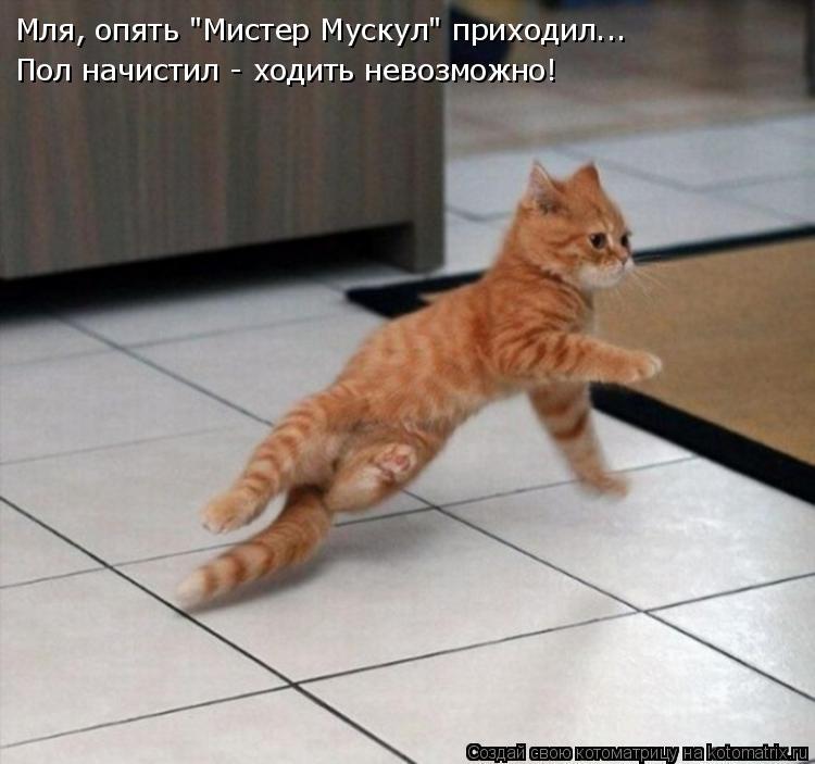 """Котоматрица: Мля, опять """"Мистер Мускул"""" приходил... Пол начистил - ходить невозможно!"""