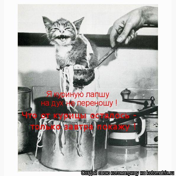 Котоматрица: Я куриную лапшу на дух не переношу ! Что от курицы осталось - только завтра покажу !