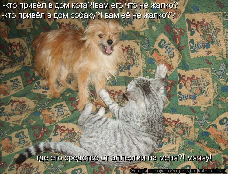 Котоматрица: -кто привёл в дом кота?!вам его что не жалко? -кто привёл в дом собаку?! вам её не жалко?? где его средство от аллергии на меня?! мяяяу!