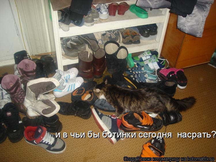 Котоматрица: и в чьи бы ботинки сегодня  насрать?