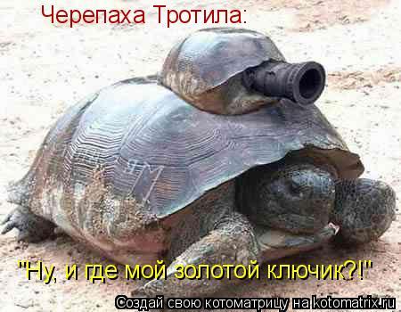 """Котоматрица: Черепаха Тротила: """"Ну, и где мой золотой ключик?!"""""""