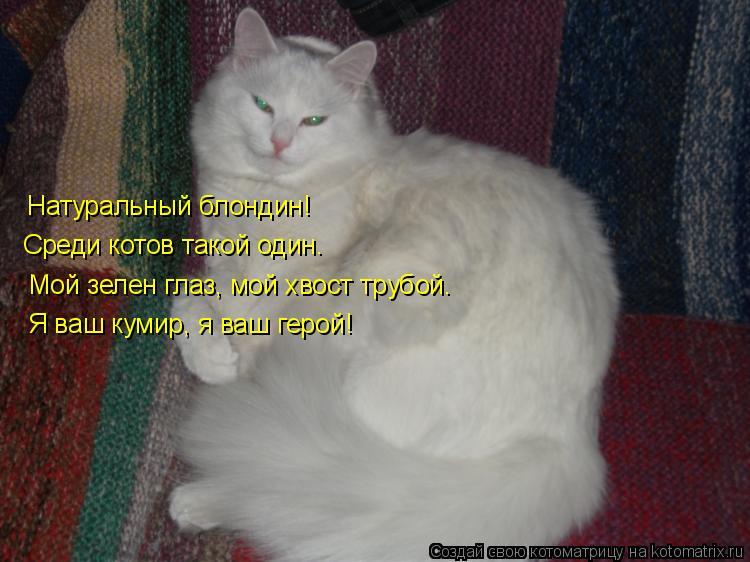 Котоматрица: Натуральный блондин! Среди котов такой один. Мой зелен глаз, мой хвост трубой. Я ваш кумир, я ваш герой!