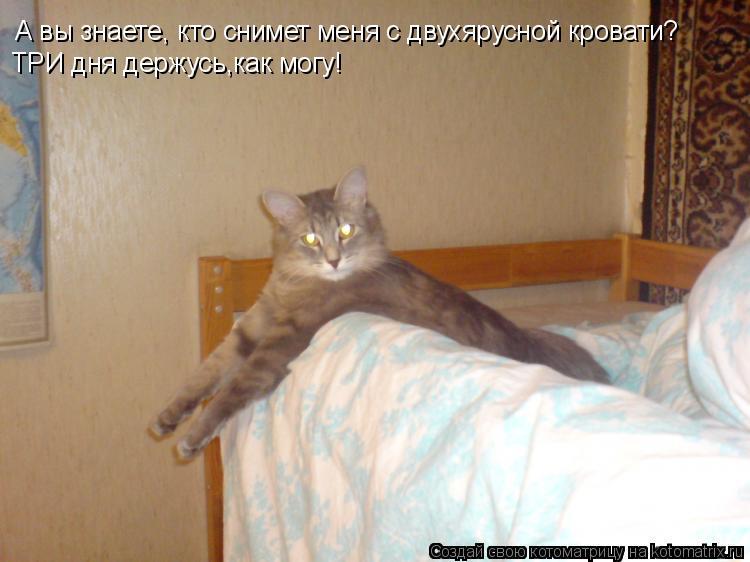 Котоматрица: А вы знаете, кто снимет меня с двухярусной кровати? ТРИ дня держусь,как могу!