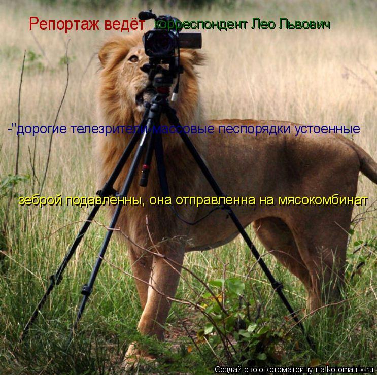 """Котоматрица: Репортаж ведёт  корреспондент Лео Львович -""""дорогие телезрители-массовые песпорядки устоенные . зеброй подавленны, она отправленна на мясо"""