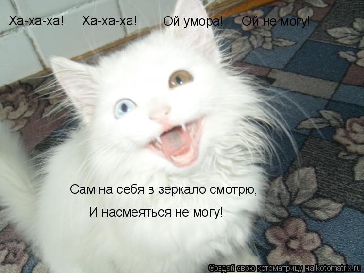 Котоматрица: Сам на себя в зеркало смотрю, Ха-ха-ха!     Ха-ха-ха! Ой умора!     Ой не могу! И насмеяться не могу!