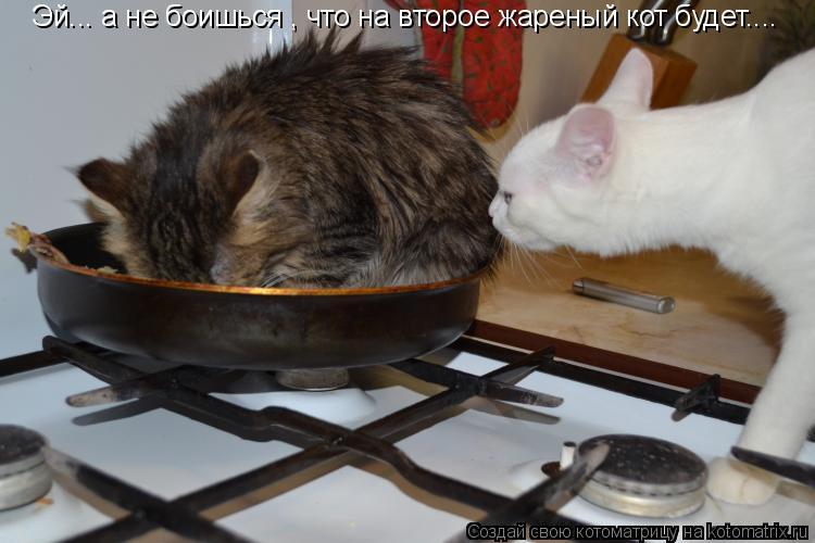 Котоматрица: Эй... а не боишься , что на второе жареный кот будет....