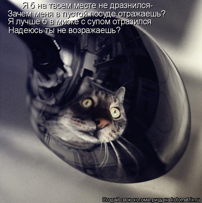 Котоматрица: Зачем меня в пустой посуде отражаешь? Я лучше б в миске с супом отразился  Надеюсь ты не возражаешь? Я б на твоем месте не дразнился-