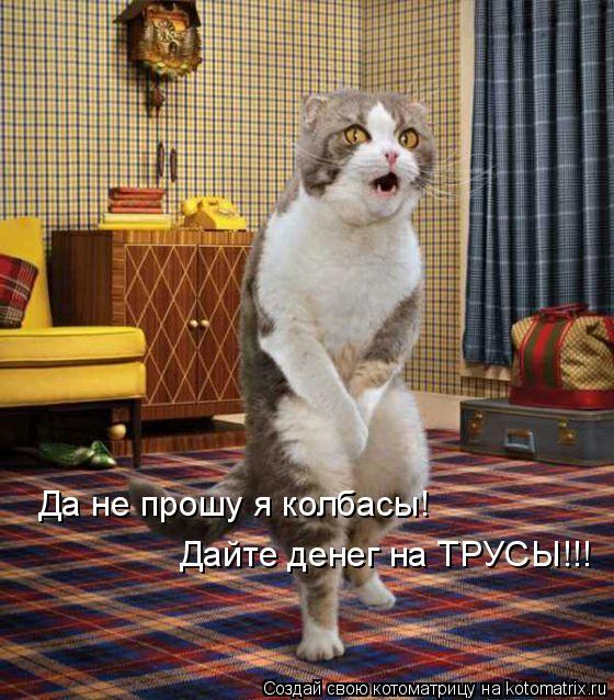 Котоматрица: Да не прошу я колбасы! Дайте денег на ТРУСЫ!!!