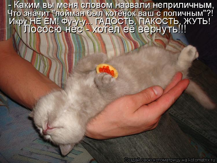 """Котоматрица - - Каким вы меня словом назвали неприличным, Что значит """"пойман был кот"""