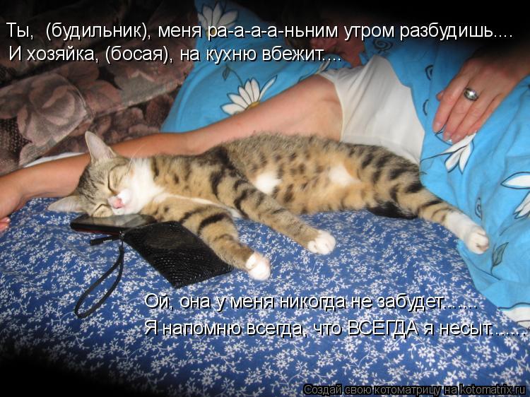 Котоматрица: Ты,  (будильник), меня ра-а-а-а-ньним утром разбудишь.... И хозяйка, (босая), на кухню вбежит.... Ой, она у меня никогда не забудет....... Я напомню в