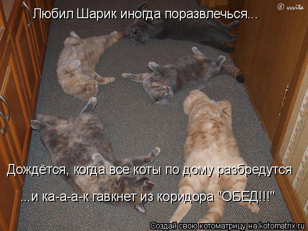 """Котоматрица: Любил Шарик иногда поразвлечься... Дождётся, когда все коты по дому разбредутся ...и ка-а-а-к гавкнет из коридора """"ОБЕД!!!"""""""
