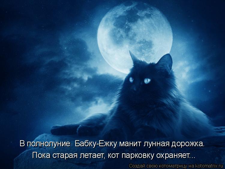 Котоматрица: В полнолуние  Бабку-Ежку манит лунная дорожка. Пока старая летает, кот парковку охраняет...