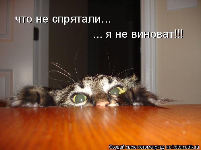 Котоматрица: что не спрятали... ... я не виноват!!!