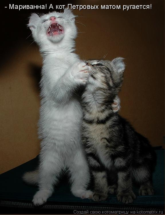 Котоматрица - - Мариванна! А кот Петровых матом ругается!