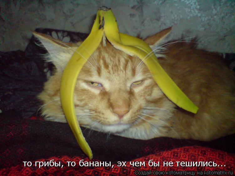 Котоматрица: то грибы, то бананы, эх чем бы не тешились...