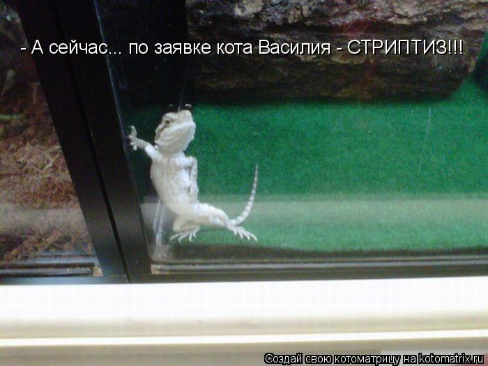 Котоматрица: - А сейчас... по заявке кота Василия - СТРИПТИЗ!!!
