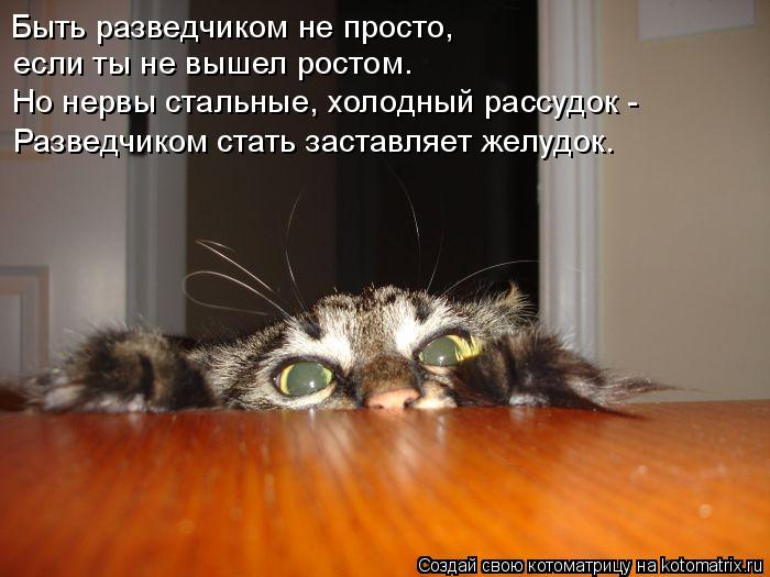Котоматрица: Быть разведчиком не просто, если ты не вышел ростом. Но нервы стальные, холодный рассудок - Разведчиком стать заставляет желудок.