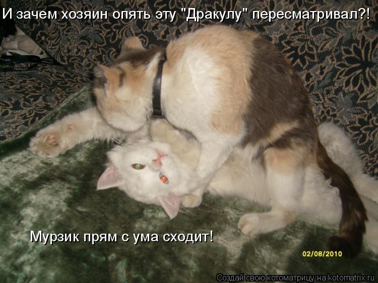 """Котоматрица: И зачем хозяин опять эту """"Дракулу"""" пересматривал?! Мурзик прям с ума сходит!"""
