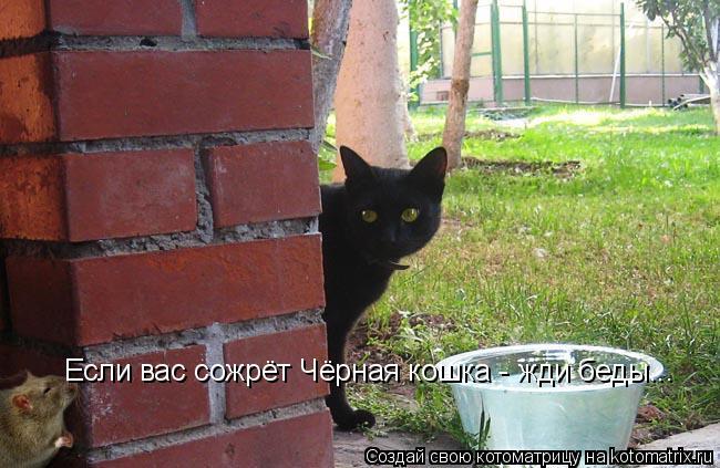 Котоматрица: Если вас сожрёт Чёрная кошка - жди беды...