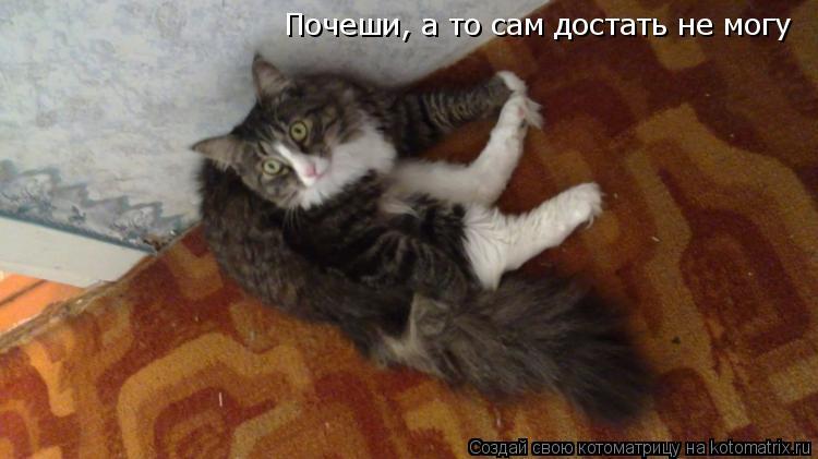 Котоматрица: Почеши, а то сам достать не могу !