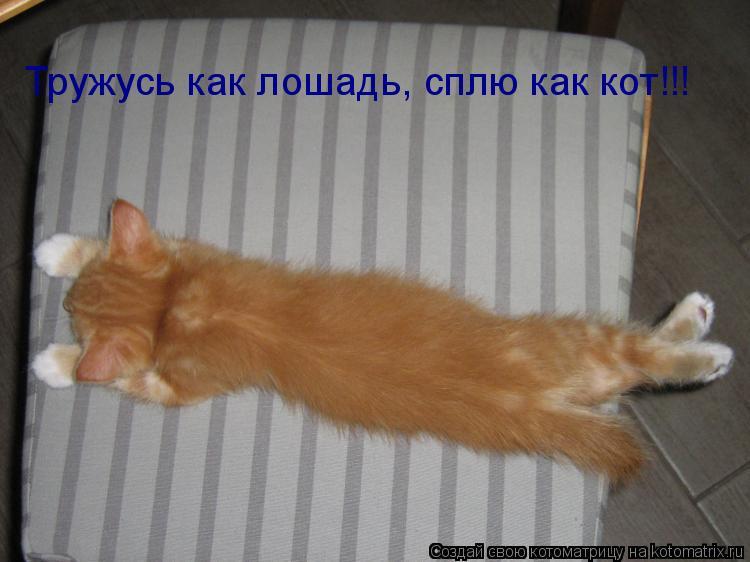 Котоматрица: Тружусь как лошадь, сплю как кот!!!