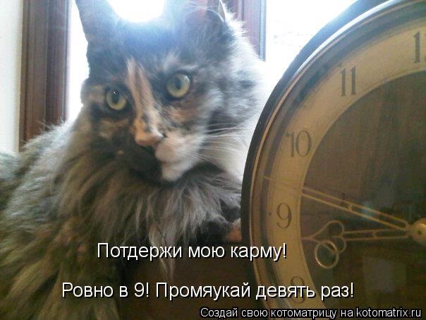 Котоматрица: Ровно в 9! Промяукай девять раз!  Потдержи мою карму!