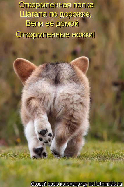 Котоматрица: Откормленная попка Шагала по дорожке, Вели её домой Откормленные ножки!
