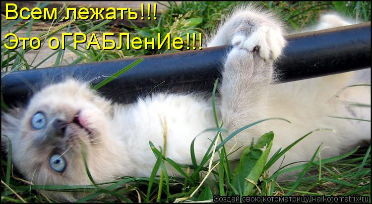 Котоматрица: Всем лежать!!!  Это оГРАБЛенИе!!!