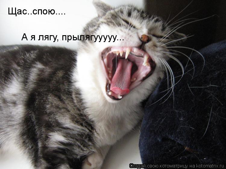 Котоматрица: Щас..спою.... А я лягу, прылягууууу...