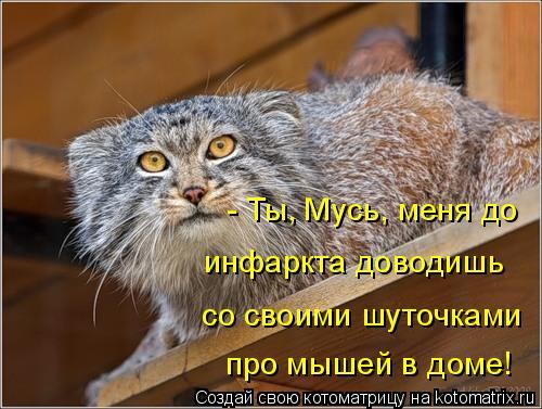 Котоматрица: - Ты, Мусь, меня до  со своими шуточками инфаркта доводишь про мышей в доме!