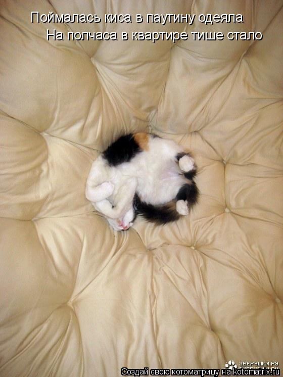 Котоматрица: Поймалась киса в паутину одеяла На полчаса в квартире тише стало