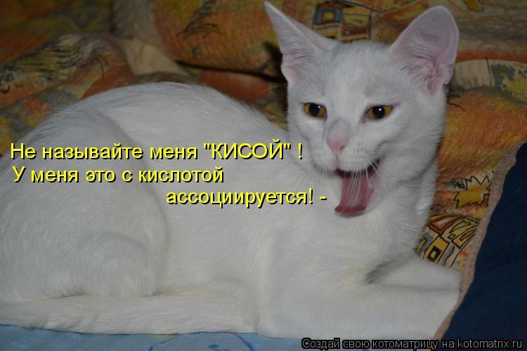 """Котоматрица: Не называйте меня """"КИСОЙ"""" ! У меня это с кислотой  ассоциируется! -"""