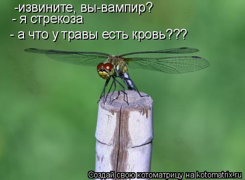 Котоматрица: -извините, вы-вампир? - я стрекоза - а что у травы есть кровь???