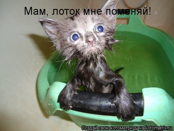 Котоматрица - Мам, лоток мне поменяй!