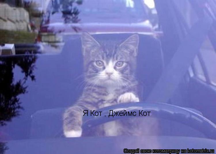 Котоматрица: Я Кот , Джеймс Кот