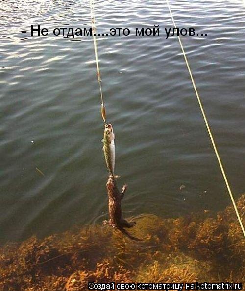 Котоматрица: - Не отдам.....моя рыба... - Не отдам....это мой улов...